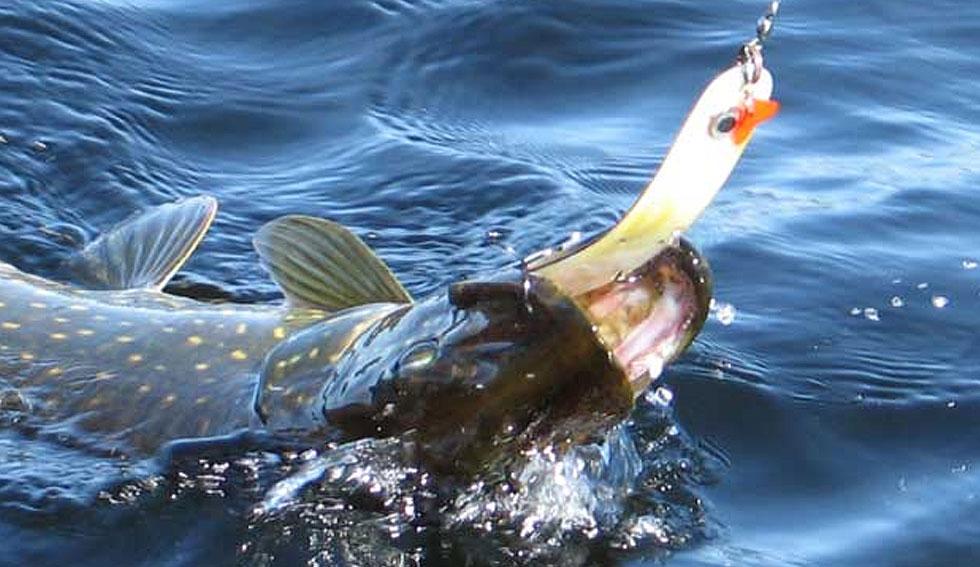 Hechtfischen in Schweden